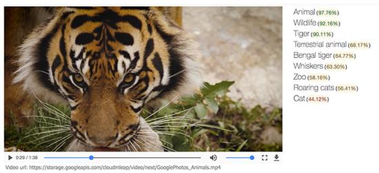 识别视频中老虎